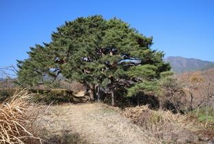 산림청, 남원 산림녹화탑 등 5곳 국가산림문화자산 신규 지정