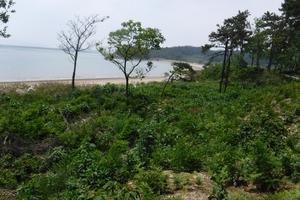 독특한 생태계를 가진 도서·해안의 산림경관 복원을 확대한다!